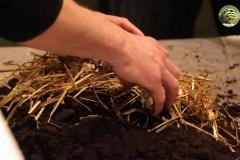 fabrication-terreau-boite-champignon-soiree-alternative