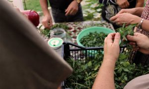 Chantier participatif à l'Oasis ressource des Jardins Baugnac.