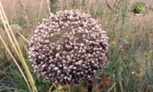 Graines paysannes - Oasis ressource des Jardins de Baugnac
