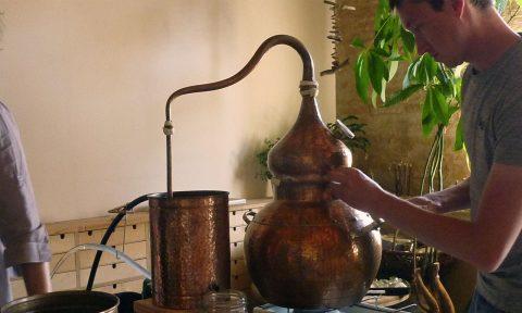 Atelier pour apprendre à cueillir et distiller, les Ateliers en Herbe.