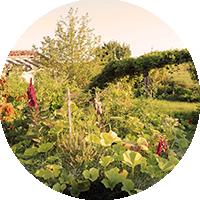 Genèse du Jardin Forêt de Baugnac.