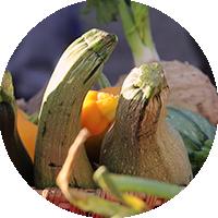 Comment trouver des légumes en vente directe à Lavalette ?