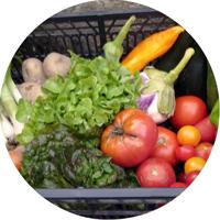 Comment trouver des légumes en vente directe à Pin-Balma ?