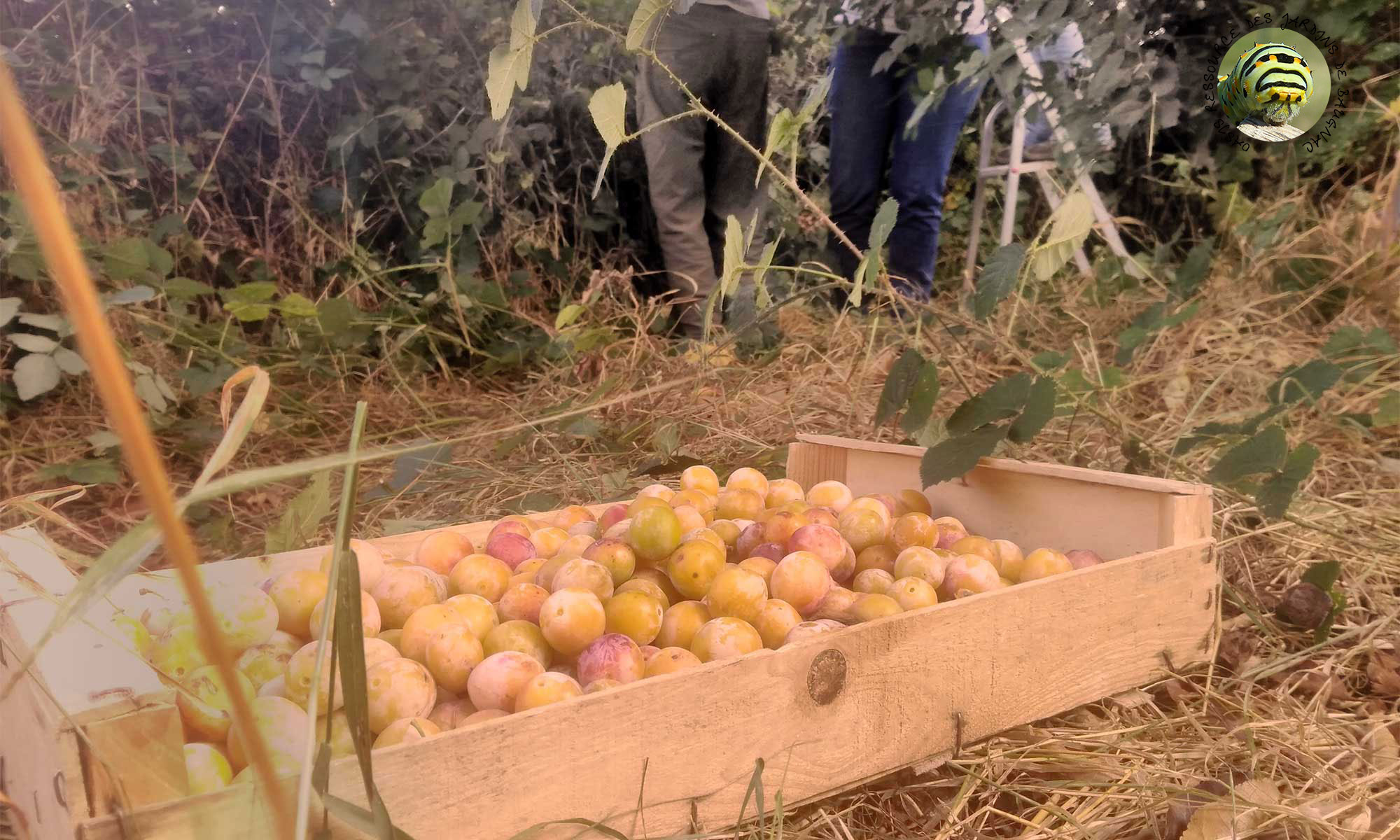 Auto-cueillette de Baugnac - Oasis ressource de Baugnac